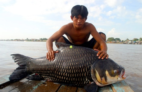 Tonlesap fish